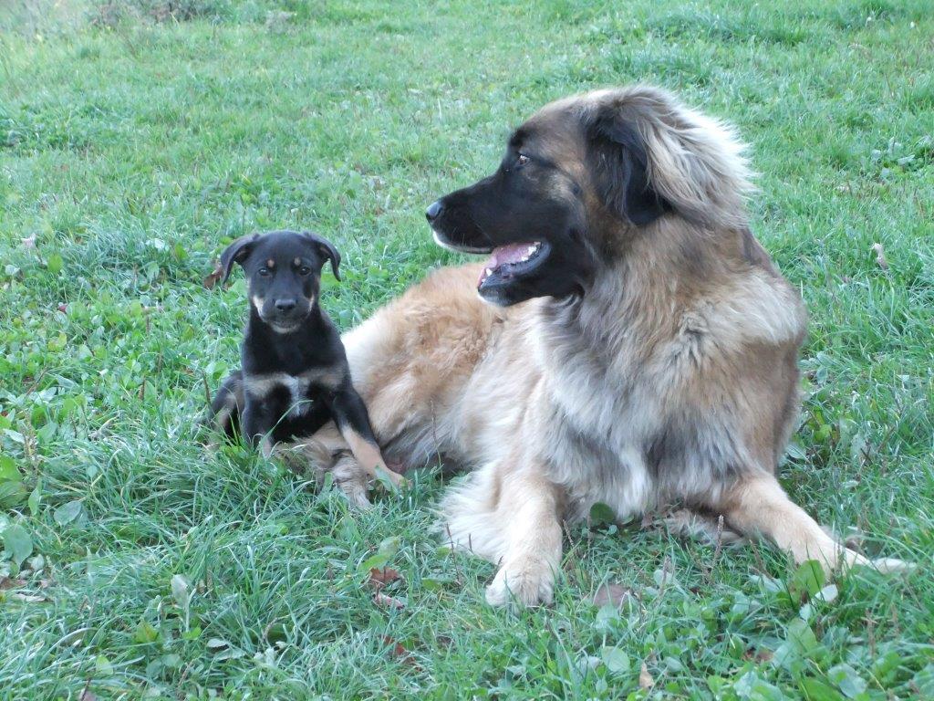 Baby Balou mit Fienchen